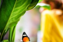 Yellow color attracts butterflies