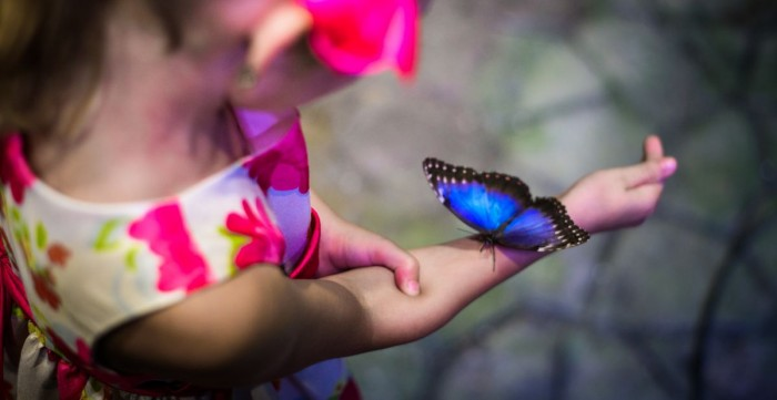 PAPILONIA - a butterfly house