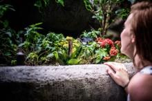 Exotický svět motýlů a deštného pralesa v centru Prahy