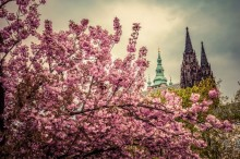 Prague is full of blossoms